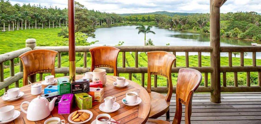 Tea Plantation, Mauritius